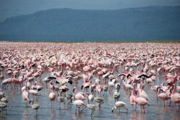 Nakuru County